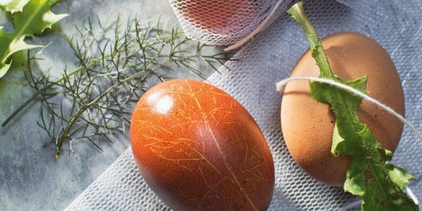 Storybild  ostern-eier-faerben-wie-richard-rauch-und-katharina-seiser 01